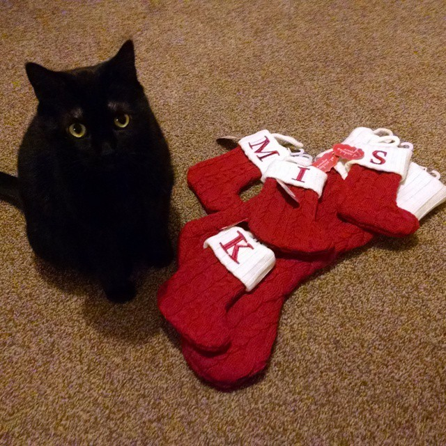 My cat with our Christmas stockings